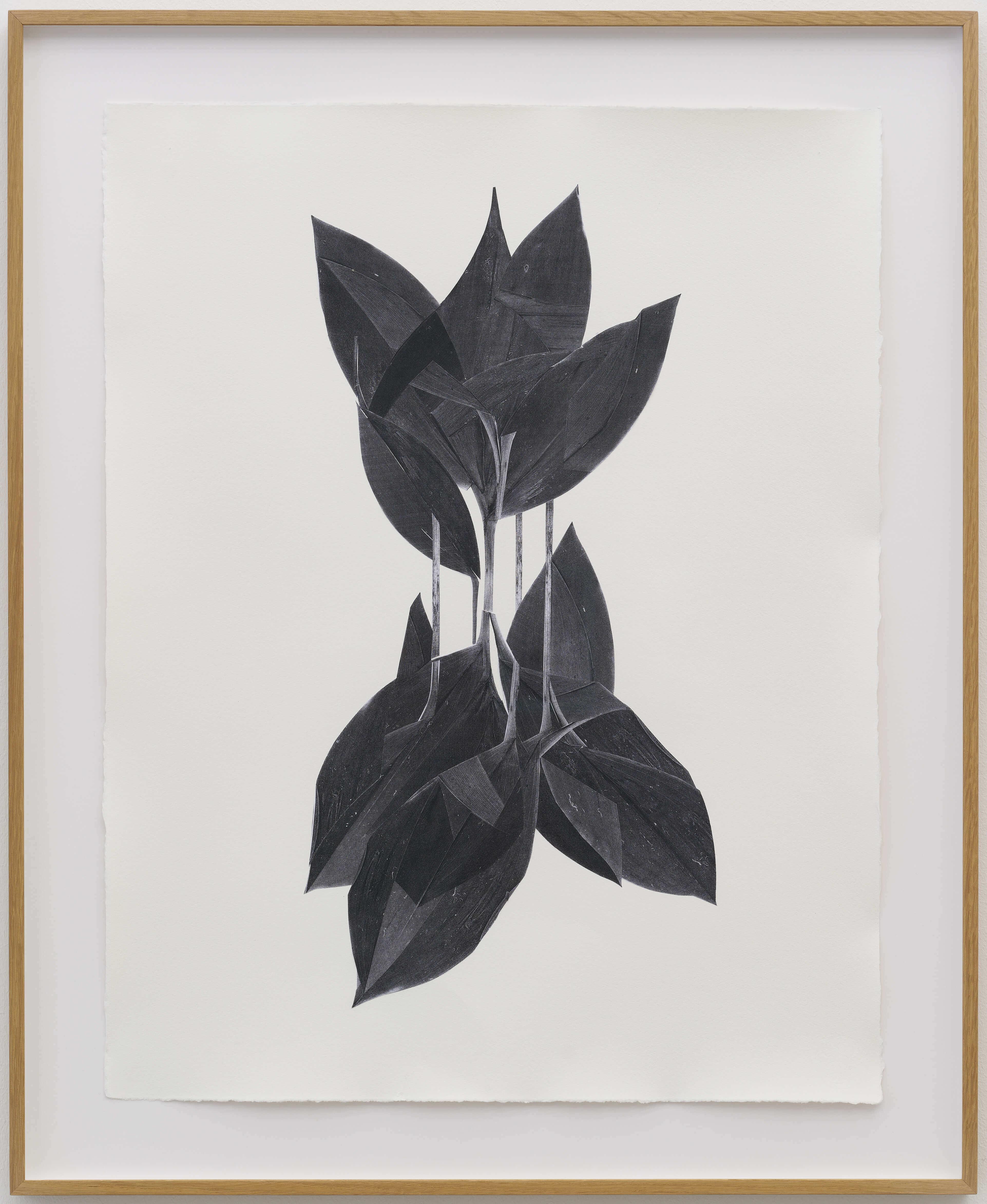 botanicals_6
