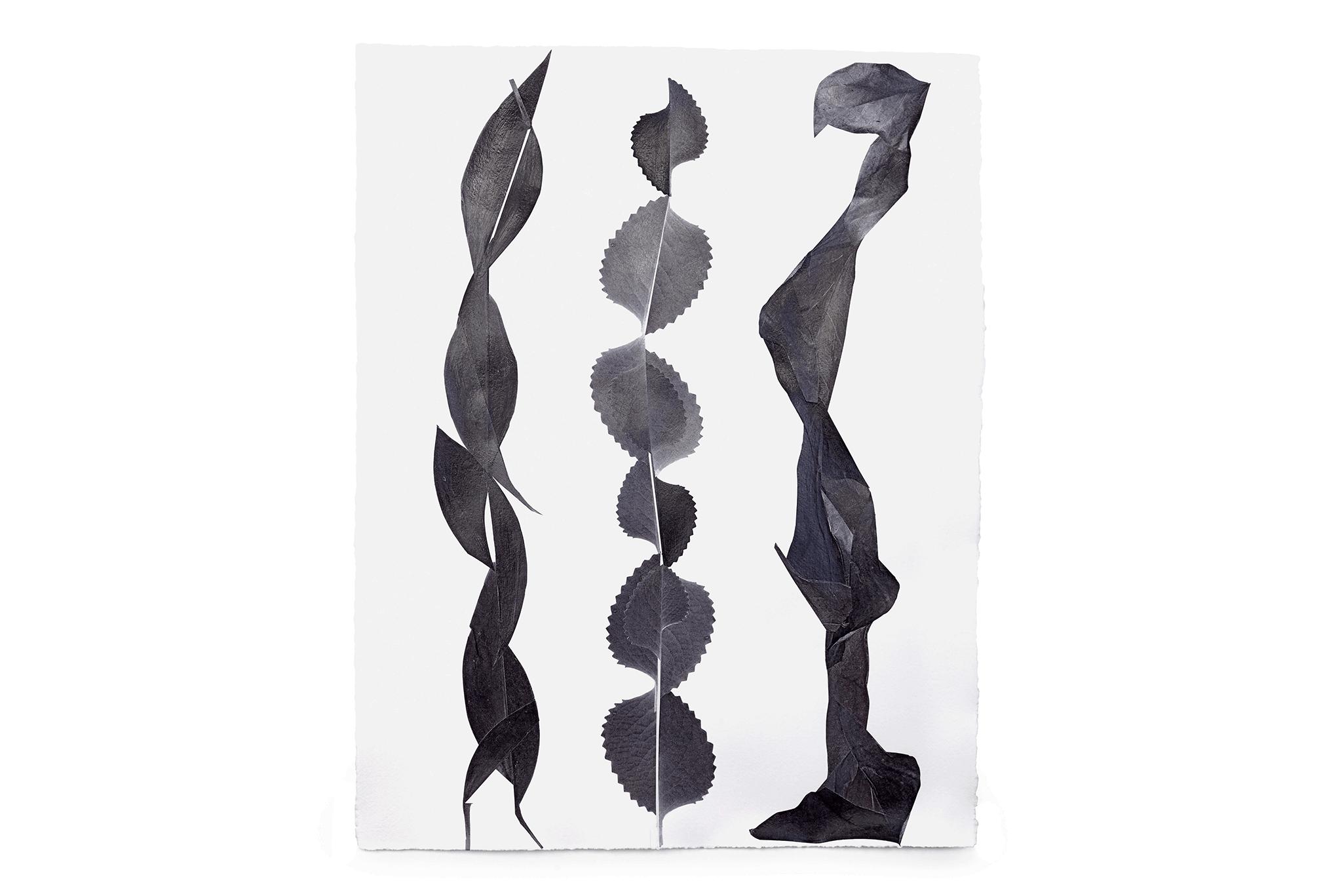 01_Frauke-Dannert_Collage_Ausstellung_Folie_Galerie-Lisa-Kandlhofer_Botanicals11